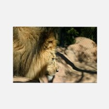 African Lion Rectangle Magnet