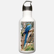 Blue And Gold Macaw Water Bottle