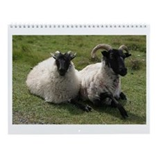 All Sheep All Year Wall Calendar