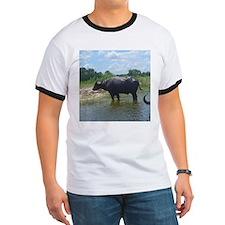 water buffalo T