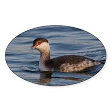Horned Grebe Decal