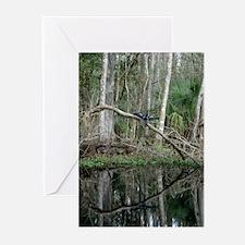 Anhinga Reflection Greeting Cards (Pk of 10)