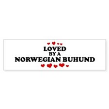 Loved: Norwegian Buhund Bumper Bumper Sticker