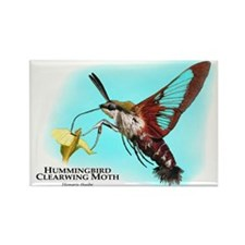 Hummingbird Clearwing Moth Rectangle Magnet