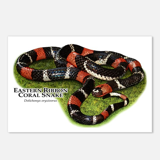 Eastern Ribbon Coral Snake Postcards (Package of 8