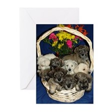 Schnauzer Pups Holiday Greeting  Cards (Pack