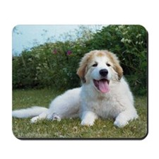 Great Pyrenees Puppy<br>Mousepad