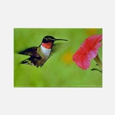 Hummingbird Rectangle Magnet