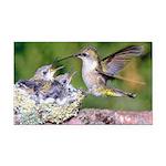 Hummingbird Rectangle Car Magnet
