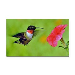 Hummingbird Rectangle Car Magnet