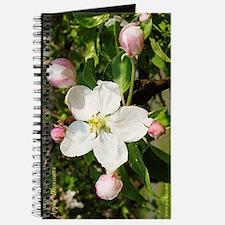 Apple Blossom Journal