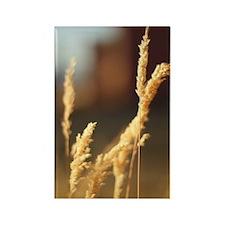 Wheat Grass Rectangle Magnet