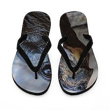 gopher tortoise Flip Flops