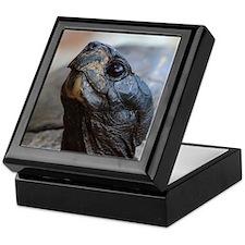gopher tortoise Keepsake Box