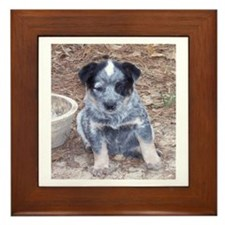 Cute Cattle breeds Framed Tile