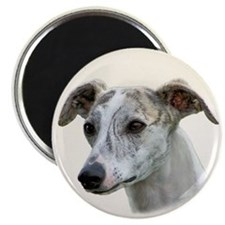 Whippet - Sight Hound - Show Dog Magnet