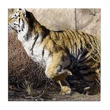 Cute Tiger lover animals wildlife Tile Coaster