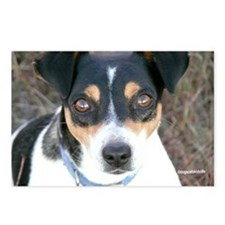 Boo the Rat Terrier Postcards (Package of 8)