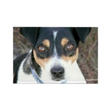 Boo the Rat Terrier Rectangle Magnet