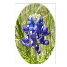 Texas Bluebonnet Postcards (Package of 8)