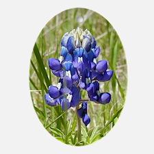 Texas Bluebonnet Oval Ornament