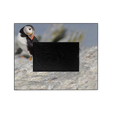 Posing puffin Picture Frame