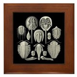 Trilobites Framed Tiles