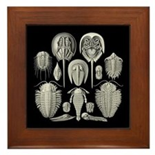 Haeckel Trilobites Framed Tile