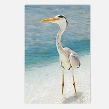 Heron Postcards (Package of 8)