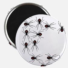 Creepy Crawly Spiders Magnet