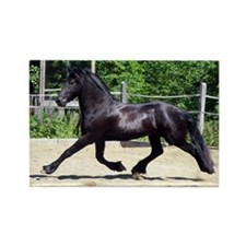 """""""Friesian 5"""" Rectangle Magnet (100 pack)"""