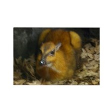 chevrotain Rectangle Magnet
