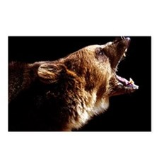 Bear Snarl Postcards (Package of 8)