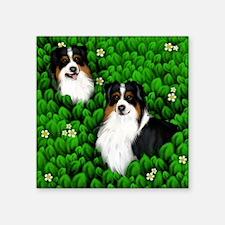 "austrsheph pikaboo copy Square Sticker 3"" x 3"""