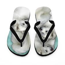 samoyed3PR Flip Flops