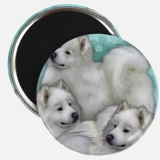 samoyed dogs Magnet