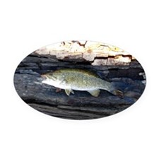 Woody Smallmouth Bass Oval Car Magnet