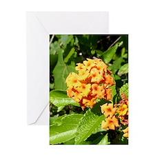 Lantana Orange Explosion Cluster LS2 Greeting Card