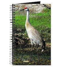 Sandhill Crane on Patrol Journal