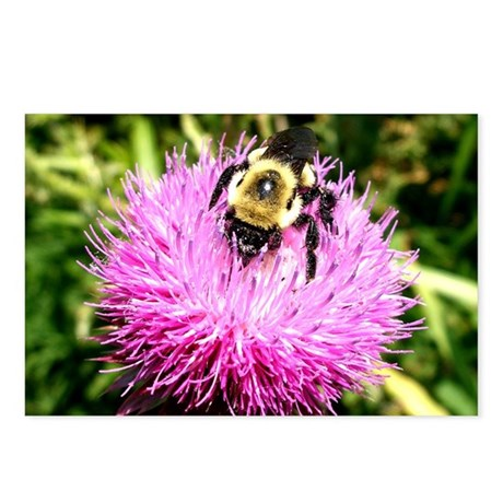 Bumble bee on Magenta Thi Postcards (Package of 8)