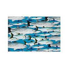 Atlantic School of Fish Attack 1  Rectangle Magnet