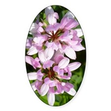 Redbud in MO Cercis canadensis Decal