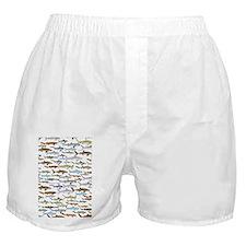 school of sharks 2V3 Boxer Shorts