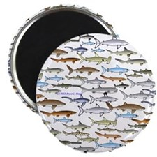 school of sharks 2f2 Magnet