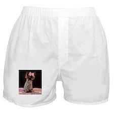Freida wearing her pink bow. Boxer Shorts