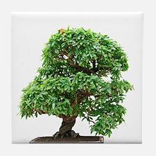 Punica Granatum bonsai Tile Coaster