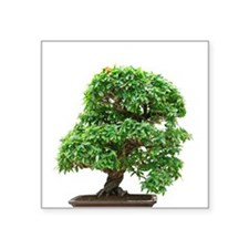 "Punica Granatum bonsai Square Sticker 3"" x 3"""