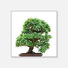 """Punica Granatum bonsai Square Sticker 3"""" x 3"""""""