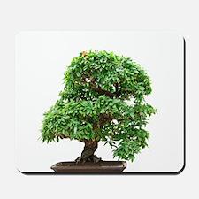 Punica Granatum bonsai Mousepad
