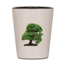 Punica Granatum bonsai Shot Glass